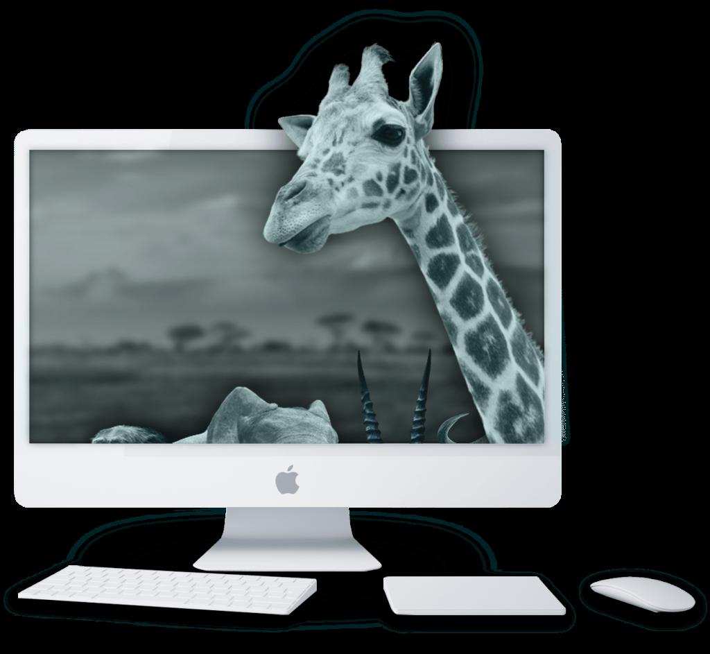 agence_google_adwords_girafe