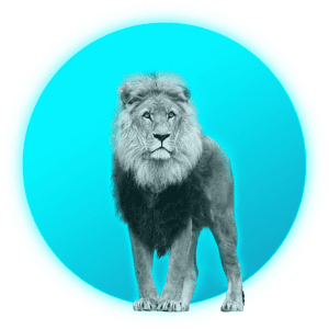 simba_lion+soleil_digital_marketing