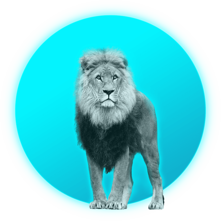 simba_lion+soleil_digital_marketing