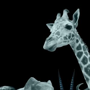page_1_google_girafe